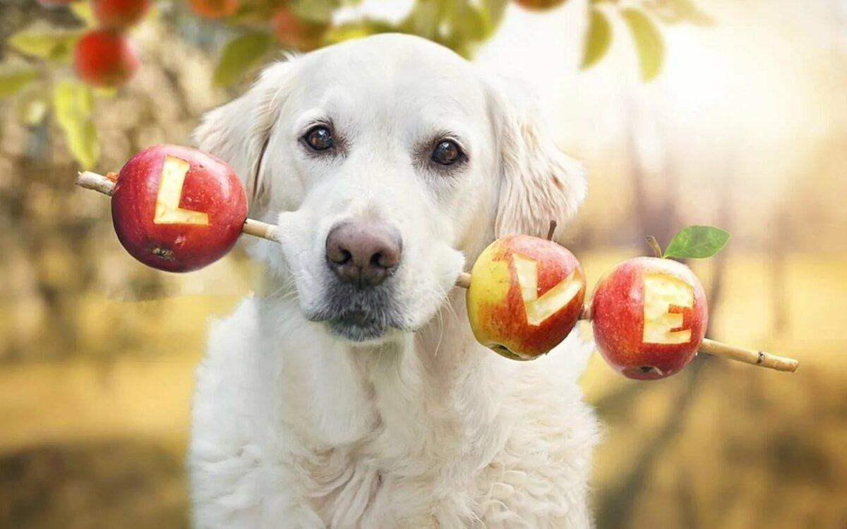 Яблоко кошкам можно ли давать польза и вред