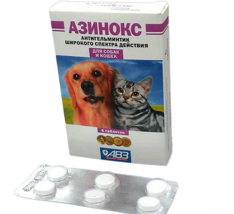 Дисбактериоз у кошек диета
