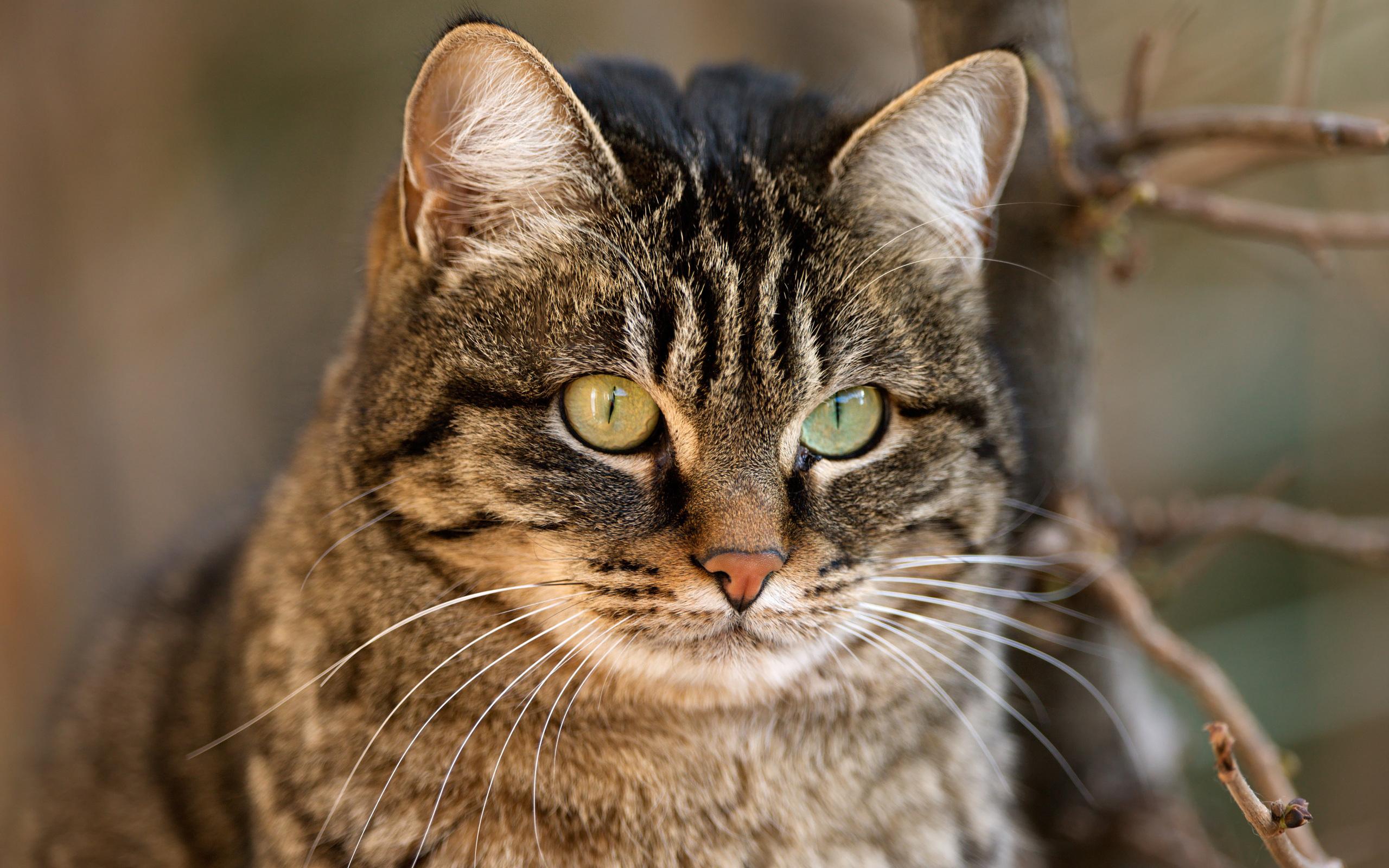 Смотреть картинки кошек, открытках октября