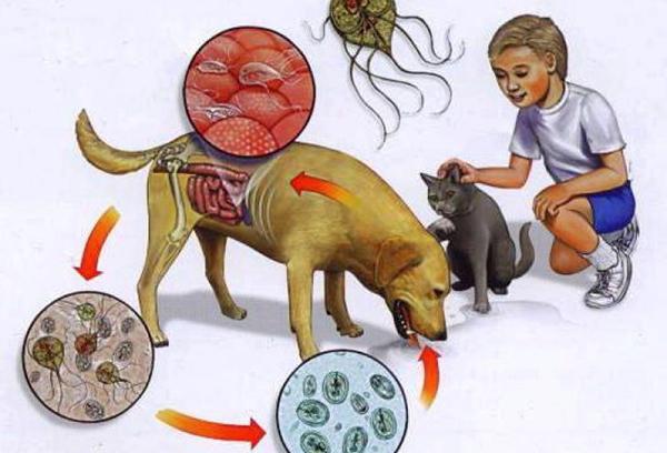 Лечение лямблиоза у собак.jpg
